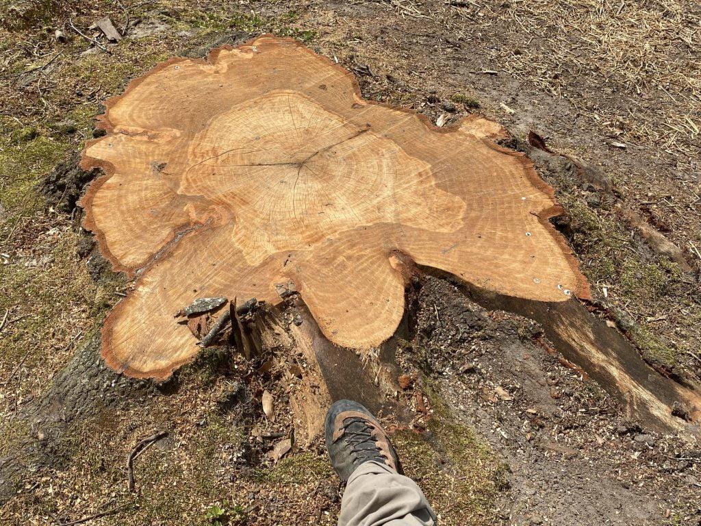 Huge Stump Removal