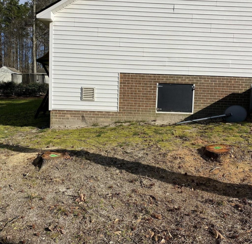 Johnston County Stump Grinding Before